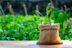De jong boompjeinstallatie is in een zak van de geldzak in een openluchttuin royalty-vrije stock fotografie