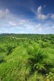 De jonge Aanplanting van de Palm van de Olie Royalty-vrije Stock Afbeelding