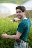 De jonge aantrekkelijke bladeren van het tuinmanknipsel Stock Foto