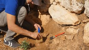 De jonge archeologenwerken aangaande een archeologische plaats stock afbeeldingen