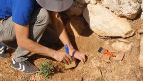De jonge archeologenwerken aangaande een archeologische plaats stock foto