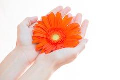 De jonge bloem van de vrouwenholding in haar handen Stock Foto