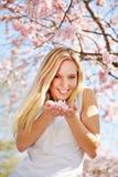 De jonge bloesems van de vrouwen ruikende kers Royalty-vrije Stock Afbeelding
