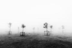 De jonge bomen met kweken steun royalty-vrije stock afbeeldingen