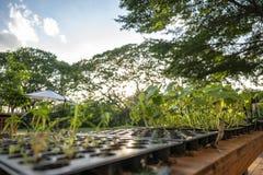 De jonge boompjes groeien in de de landbouw plastic bloempot op een rij met grote boom en hemelachtergrond royalty-vrije stock foto's
