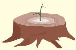 De jonge boomspruit van cutted  Stock Foto's
