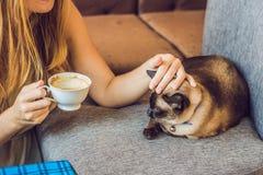 De jonge die vrouw drinkt koffie en strijkt de kat tegen de achtergrond van de bank door katten wordt gekrast stock afbeelding