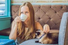 De jonge die vrouw drinkt koffie en strijkt de kat tegen de achtergrond van de bank door katten wordt gekrast stock foto's