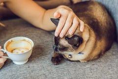 De jonge die vrouw drinkt koffie en strijkt de kat tegen de achtergrond van de bank door katten wordt gekrast royalty-vrije stock afbeelding
