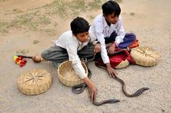 De jonge geitjes van de cobra Stock Foto's