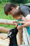 De jonge geitjes van de papa en van de dochter feedind. Stock Fotografie