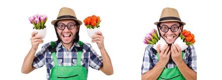 De jonge grappige tuinman met tulpen isoleerde oin wit royalty-vrije stock foto's