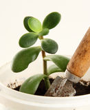 De jonge groene installatie. Een pot, een tuintroffel Royalty-vrije Stock Foto's
