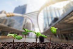 De jonge groene spruiten met water laten vallen het groeien van grond op vage stad met zachte zonlichtachtergrond royalty-vrije stock afbeelding