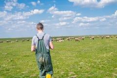 De jonge herder Royalty-vrije Stock Foto's