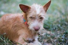 De Jonge hond Stock Afbeeldingen