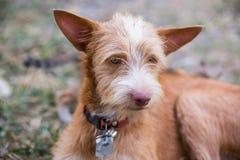 De Jonge hond Stock Afbeelding