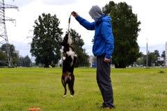 De jonge hond luistert aan de eigenaar en oefent functies op het bevel uit Braaf en intelligente hond Opleiding stock afbeeldingen