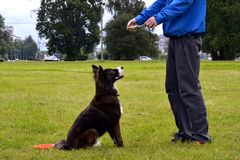 De jonge hond luistert aan de eigenaar en oefent functies op het bevel uit Braaf en intelligente hond Opleiding royalty-vrije stock foto's