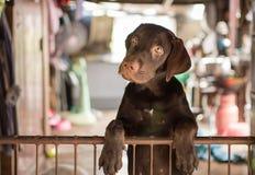 De jonge hond is opgesloten stock foto