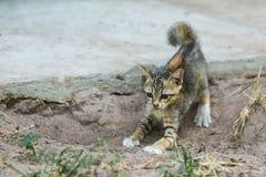 De Jonge kat Stock Foto's