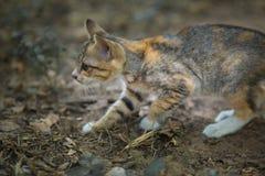 De Jonge kat Stock Fotografie