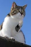 De jonge kat onderzoekt de wereld Stock Afbeelding
