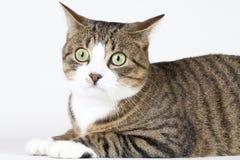 De jonge kat wacht Stock Afbeeldingen