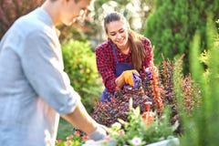 De jonge kereltuinman in tuinhandschoenen zet de potten met zaailingen in het witte houten vakje op de lijst en een meisje snoeit stock fotografie