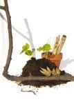 Jonge knipsels van zaad en capsules met tak, pot en bamboe Royalty-vrije Stock Afbeeldingen