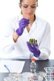 De jonge laboratoriummedewerker maakt sommige geïsoleerden tests, stock afbeelding