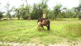De jonge magere ruiter op horseback komt dichtbij een veulen stock footage