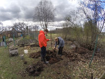 De jonge man en de vrouw planten een jong boompje van de fruitboom in het voorbereide gat in de vochtige grond in de lente Royalty-vrije Stock Afbeeldingen