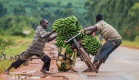 De jonge man is gelukkig door fiets op de weg een grote aaneenschakeling van bananen op de markt te verkopen Royalty-vrije Stock Foto