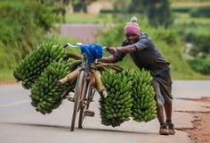 De jonge man is gelukkig door fiets op de weg een grote aaneenschakeling van bananen op de markt te verkopen Stock Fotografie
