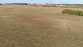 De jonge mens lanceert een vlieger en loopt met hem over het gebied Lucht panorama stock videobeelden