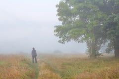 De jonge mens in mistige ochtend op weide in de herfst bekijkt grote boom Royalty-vrije Stock Afbeelding