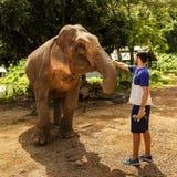 De jonge mens voedt olifanten met bananen in een heiligdom in jun stock foto