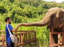 De jonge mens voedt olifanten met bananen in een heiligdom in de wildernis van Chiang Mai stock afbeelding