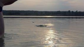 De jonge mens werpt een kiezelsteen springend op meerwateren in slo-mo stock videobeelden
