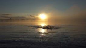 De jonge mens zwemt kroppen in een meer bij zonsondergang in slo-mo stock videobeelden