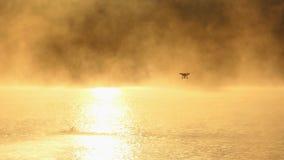 De jonge mens zwemt kruipt in een gouden meer Een hommel is over stock videobeelden