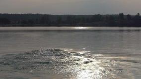 De jonge mens zwemt kruipt in meerwateren bij zonsondergang in slo-mo stock footage