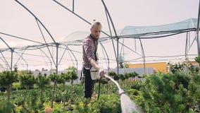De jonge mensentuinman die schort dragen geeft potteninstallatie water en controleert bladeren terwijl het werken binnen serre be stock video