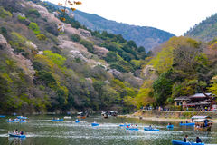 De jonge minnaars en familiespeddelroeiboten omhoog Katsura River in Kyoto om van de de lentekers te genieten komt tot bloei Royalty-vrije Stock Fotografie