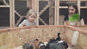 De jonge mooie moeder met weinig dochter is voerproefkonijnen en kuikens stock footage