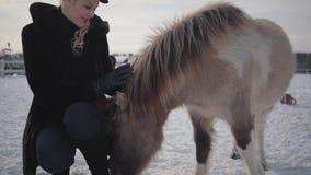 De jonge mooie vrouw strijkt snuit aanbiddelijke kleine poney bij boerderij dichte omhooggaand Het meisje in warme kleding brengt stock videobeelden