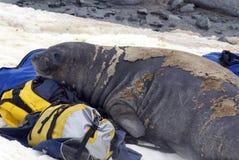 De jonge olifantsverbinding in ruit op duffel zakken Royalty-vrije Stock Afbeeldingen