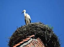 De jonge ooievaarskosten in een nest tegen de blauwe hemel stock fotografie
