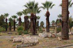 De jonge palmen zijn reuzen onder de stenen Het ontwerp van het landschap stock foto's